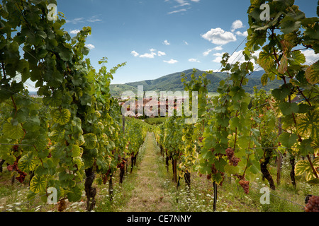 View through the vineyards along the famous wine route in Alsace, France - Stock Photo