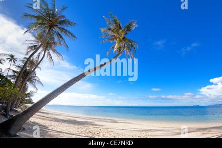 Palm trees on the Bang Por beach sand on tropical resort Koh Samui, Thailand - Stock Photo
