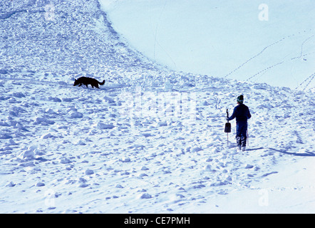 Professional ski patrolman and trained search and rescue dog begin searching for a skier buried in a snow avalanche - Stock Photo