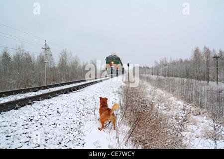redhead dog will attack train - Stock Photo