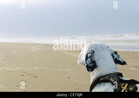 Vacation with dog in Denmark, Jammerbugten, Europe - Stock Photo