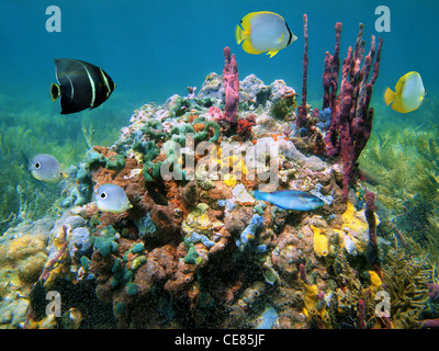 Colorful marine life with sea sponges and tropical fish underwater sea, Caribbean - Stock Photo