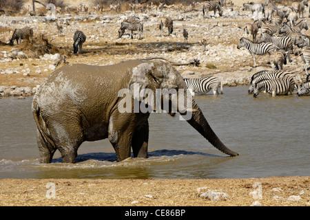 Elephant and other wildlife at waterhole, Okaukuejo, Etosha NP, Namibia - Stock Photo