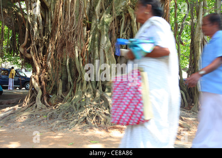 Sri Lanka, Galle, Leyn Baan street, court square, tree, trees, man, walking - Stock Photo