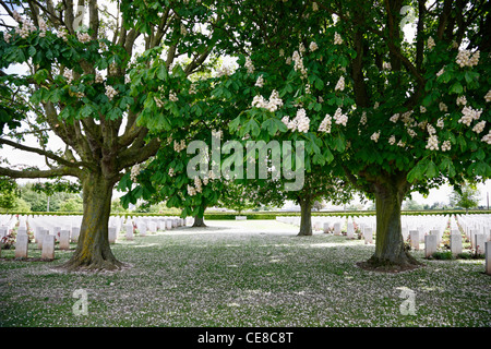 Graves under blooming chestnut trees at Bayeux War Cemetery - The British War Cemetery at Bayeux, Normandy, France - Stock Photo