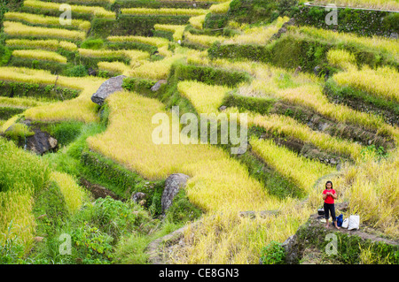 maligcong rice terraces in philippines. - Stock Photo