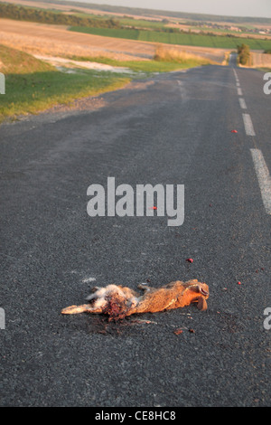 Rabbit road kill on a country road in northern France. - Stock Photo