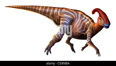 Parasaurolophus 'near-crested lizard' first described in 1922 was dinosaur lived end Cretaceous period around 70 - Stock Photo