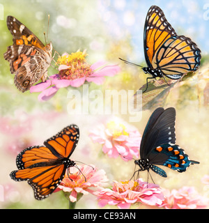 Dreamy collage of four beautiful butterflies - Monarch, Viceroy, Green Swallowtail and American painted Lady - Stock Photo