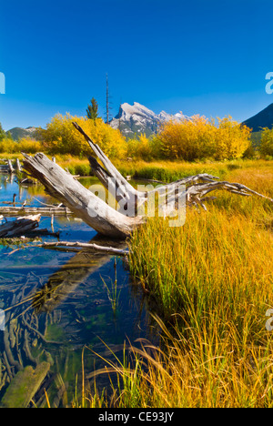 Mount Rundle near Banff reflected in Vermillion lakes with fallen trees Banff national Park Alberta Canada North - Stock Photo
