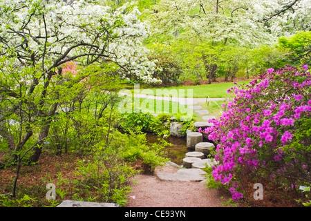 Spring color in Asticou Azalea garden on Mount Desert Island Maine. - Stock Photo