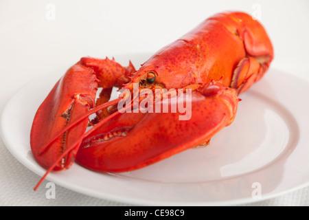 USA, Illinois, Metamora, Lobster on plate - Stock Photo