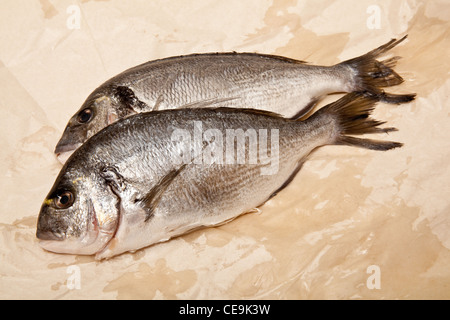 gilt-head (sea) bream (Sparus aurata) fish. - Stock Photo