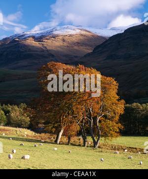 Farm scene in Glen Lyon, Perth and Kinross, Scotland, UK - Stock Photo