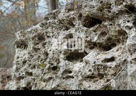 Karst limestone rock formations on the bank of Ichetucknee river, Florida, United States, USA, geology - Stock Photo