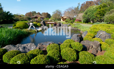 koi pond in the gosford edogawa japanese garden gosford nsw australia stock photo