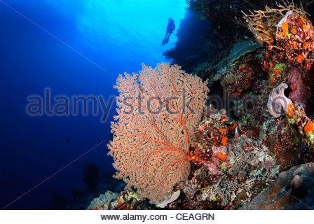 Coral Reef, Great Barrier Reef Queensland Australia - Stock Photo