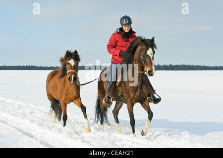 Young rider on a Paso Fino horse leading a second horse during a ride out in winter - Stock Photo