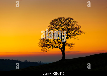 One Tree on a hill hill - Winter tree empty of leaves on a winters day at sunset in the Roaches near Leek, Staffordshire, - Stock Photo