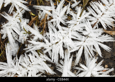 Closeup of hoar frost growing on a recently frozen pond in early winter in Chugach State Park near Eagle River, - Stock Photo