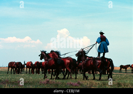 A Csiko mounted horse-herdsman in traditional garment standing on the backs of two galloping Nonius horse breed - Stock Photo
