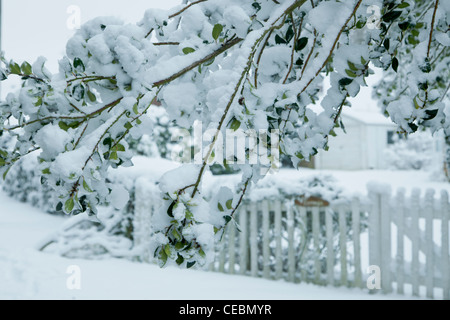 A branch is heavy with snow and hangs low in front of a white picket fence on a country road. - Stock Photo
