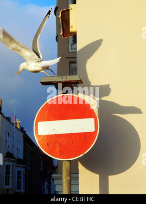 A seagull flies aways from a no entry traffic sign in Brighton. - Stock Photo