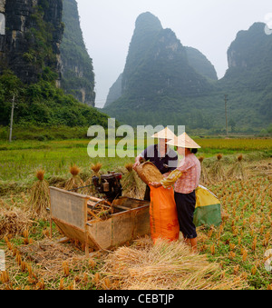 Husband and wife farmers bagging harvested rice crop in field with Karst limestone peaks near Yangshuo Peoples Republic - Stock Photo