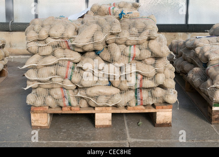 Bags of potatoes on a pallet - Stock Photo