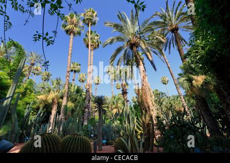 Morocco, Marrakech, Jardin Majorelle - Stock Photo