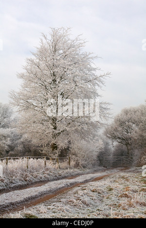 Cold frosty morning in January with hoar frost on the trees and grasses - Stock Photo