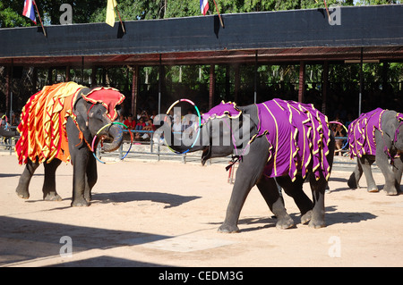 The famous elephant show in Nong Nooch tropical garden, Pattaya, Thailand - Stock Photo