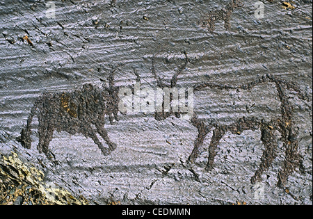 Black and white bulls fighting. Petroglyphs. Altai Tavan Bogd National Park. Mongolia - Stock Photo