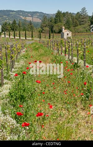 USA, California, Napa Valley, Calistoga, Castello di Amorosa vineyard