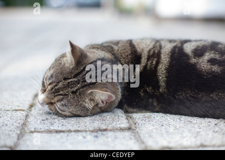 tabby cat lying down on the ground outside looking relaxed with its head up and looking out of shot - Stock Photo