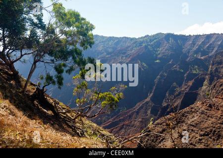 Early light illuminates the steep rock sides of Waimea Canyone on Kauai - Stock Photo