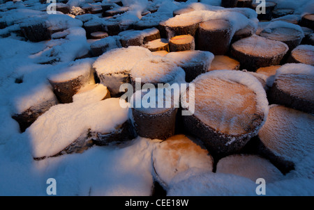 Snow covered spruce ( picea abies ) log pile - Stock Photo
