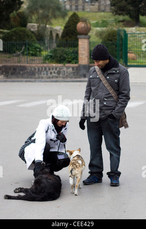 Free-ranging dog Greeting Tourist in Pompeii Italy  Canis lupus dingo - Stock Photo