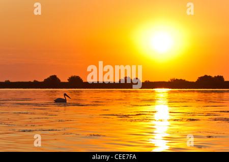 sunrise in the Danube Delta - Stock Photo