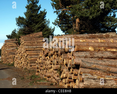 wood shapes of a tree - Stock Photo