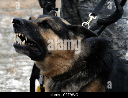 Dog wash station stock photo 113404378 alamy self service dogwellness station eddy a military working dog from mcchord air force base wash reacts solutioingenieria Gallery