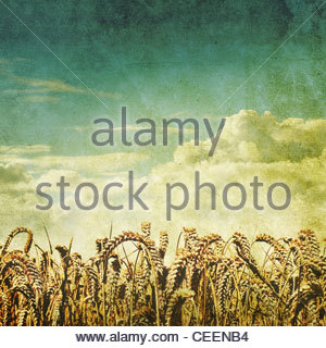 retro wheat field photo - Stock Photo