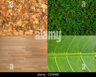 Various natural elements grouped together in one image - Stock Photo