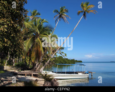 Sea shore with coconut trees leaning over the water and a boat at dock, Central America, Panama - Stock Photo