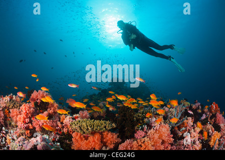 Scuba Diving on Coral Reef, North Male Atoll, Indian Ocean, Maldives - Stock Photo