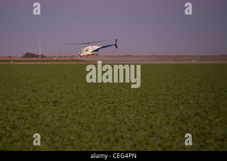 Holtville, California - A helicopter sprays a field in the Imperical Valley. - Stock Photo