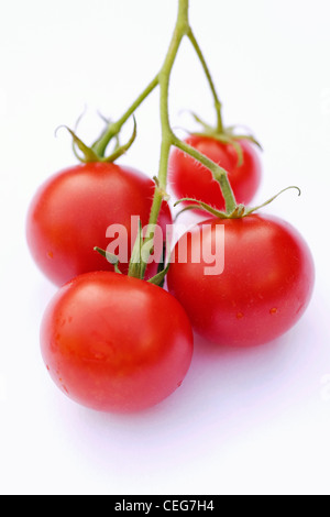 Lycopersicon esculentum. Four small cherry tomatoes 'Gardeners Delight' on a white background. - Stock Photo