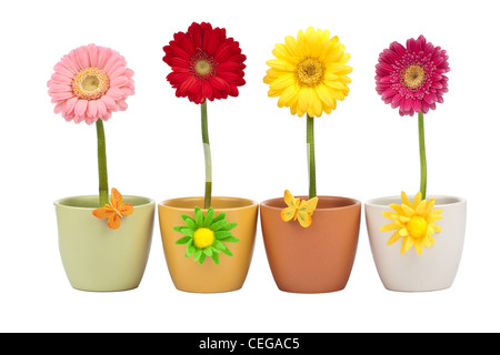 Four daisy flowers in flower pot on white background - Stock Photo