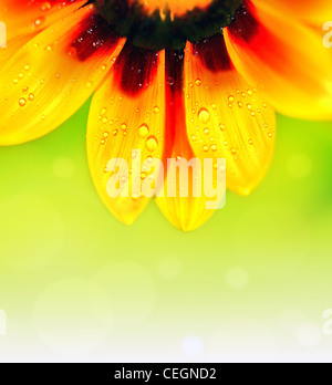 Abstract beautiful flower, colorful floral background , wet yellow petals border, daisy plant with bokeh ,nature - Stock Photo