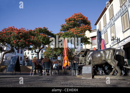 Pavement Cafe, Statue of oxen, Flamboyan Anaranjado flowering trees and Restaurant in Funchal, Madeira, Portugal. - Stock Photo